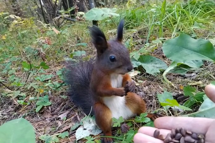 Guy accidentally reboots squirrel and it's super adorable